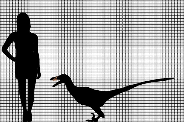 acheroraptor.jpg
