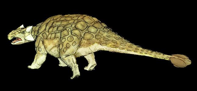 ankylosaurusmagniventris.jpg