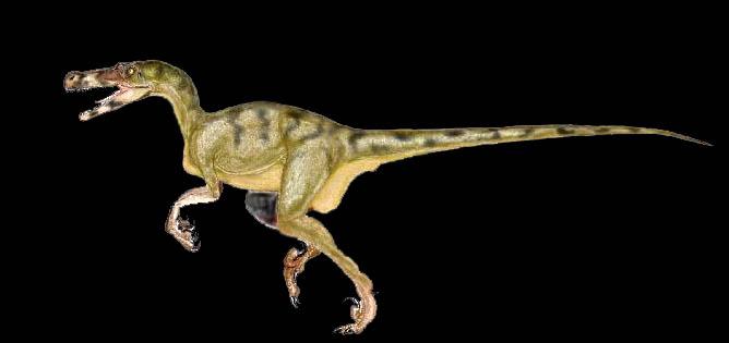 dromaeosaur.jpg