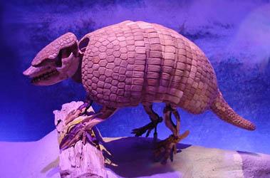 giant armadillo fossil