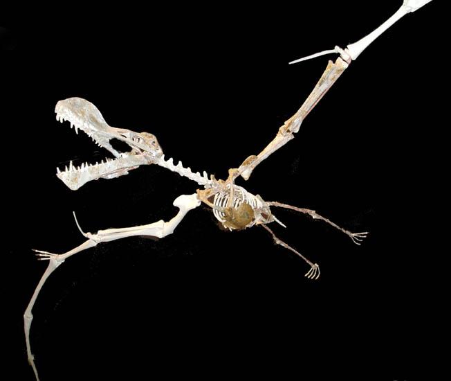 pterosaur1.jpg