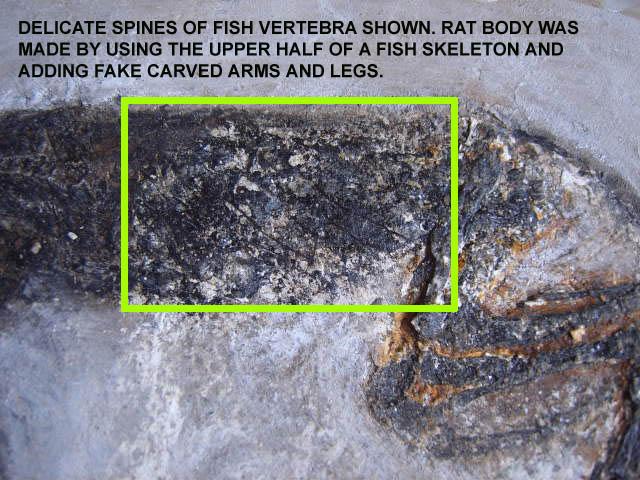 ratfakefossil5.jpg